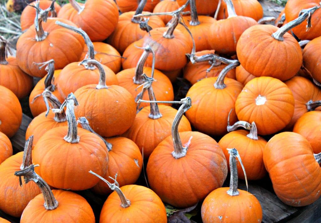 pumpkin-patch-atl